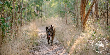 Dog Walk and Photo Shoot at Belair 13th of October tickets