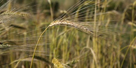 Field Lab: Plant Teams. Tools for small-scale grain processing tickets