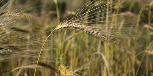 Field Lab: Plant Teams. Tools for small-scale grain processing