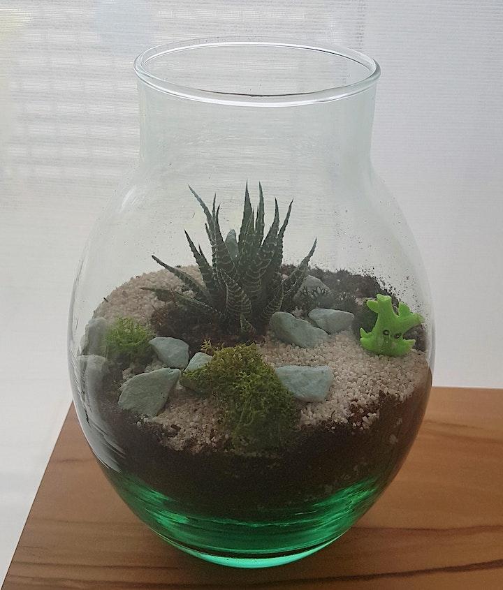 DIY Mini Terrarium: Bild