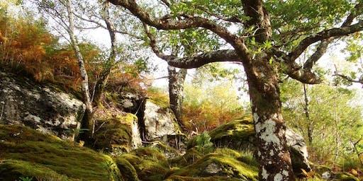 RSPB Scotland Patrons Annual Lecture - Celtic Rainforests