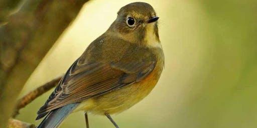 Exploring Bird Migration Safari