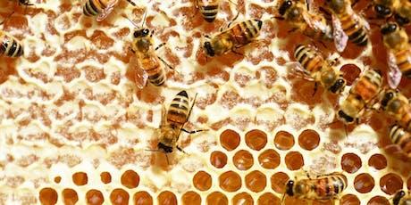 Apiario Condiviso alla scoperta del mondo delle api biglietti