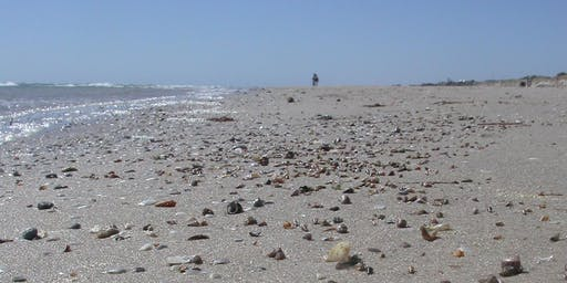 Beachcombing Guided Eco Tour with Peter Hunt