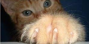 Feline Rescue Cat Claw Clipping Clinic - MPLS - Calhoun