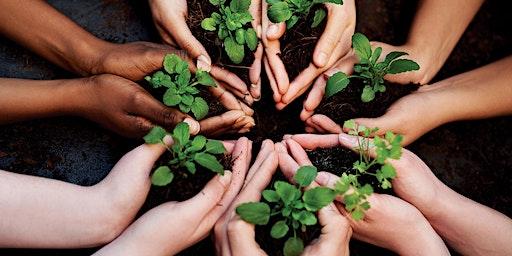 Jost Van Dyke Seeds of Love Planting