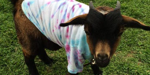 Tie-Dye with Goats