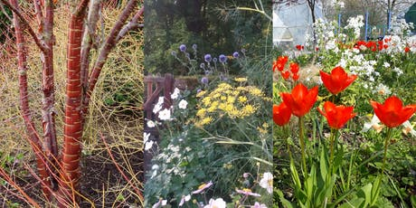 Planting for Year Round Colour Workshop tickets