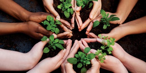 Anegada Seeds of Love Planting