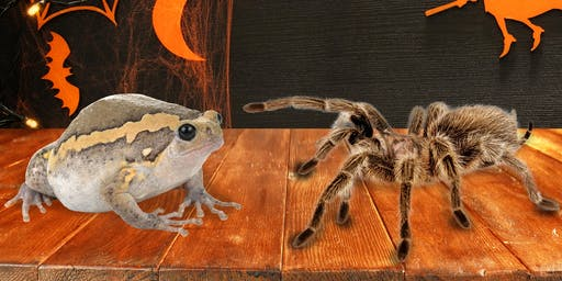 Chubby Toad or Tarantula - Take Home Pet  -  Creepy, Crawly, Cool Workshop