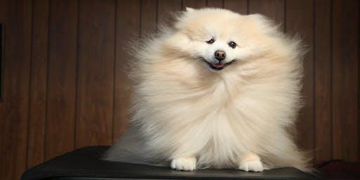 Dog Beauty Bar with Jess Rona
