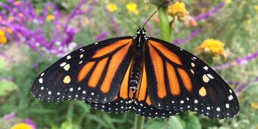 Coffee & Conversation Series: Supporting Monarch Migration
