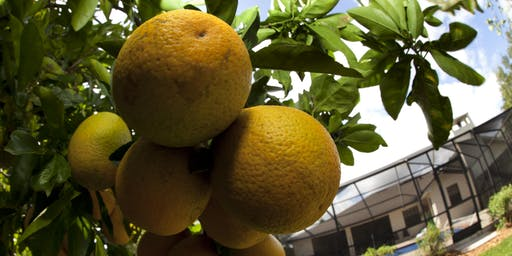 Spring 2020 Master Gardener in Training: Introduction to Citrus