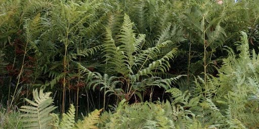 Bracken and the Historic Environment: Threats, Challenges and Solutions
