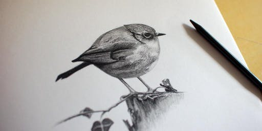 Graphite drawing skills - free workshop