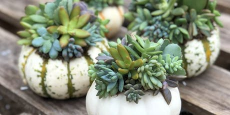Pumpkin and Pours Succulent Topped Pumpkin Workshop at Berlin Brewing Co. tickets