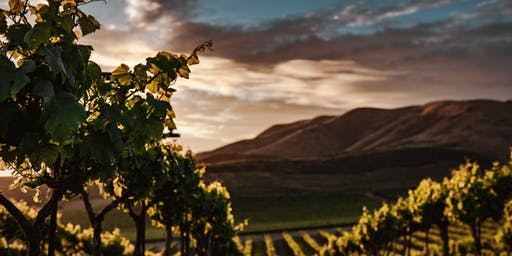 Balkan Wine Tasting: Indigenous Reds