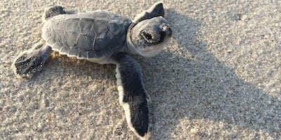 Girl Scout Sea Turtle Patch Program