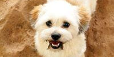 Puppy Recall Workshop - Learning To Let Your Pup Run Free But Stay Safe