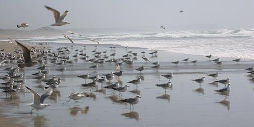 Oh No!  Not Gulls!