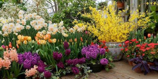 Fall Bulbs: Perfecting the Flower Garden