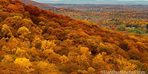 The Science of Leaf Color