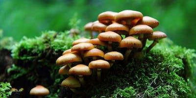 Mushroom Camp at Point Reyes National Seashore