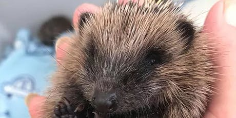 Half term, Parent and Child - Make a hedgehog house, 29th October, age 8+ tickets