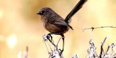 Winter Birds of Tomales Bay