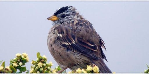 Birding 101 - Discovering Birds at Point Reyes