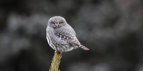 Owls of Northern Colroado tickets