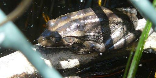 Create a Backyard Frog Pond Workshop