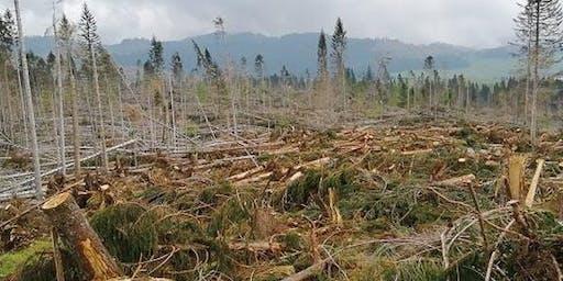 La ricostruzione dei boschi distrutti dalla tempesta Vaia