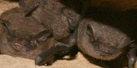 Beneficial Bats in your Belfry tickets
