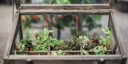 A Closer Look at the Art of Terrariums