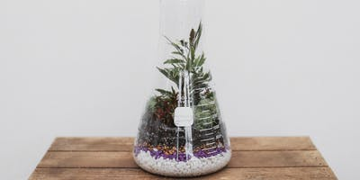 Mad Scientist Terrariums