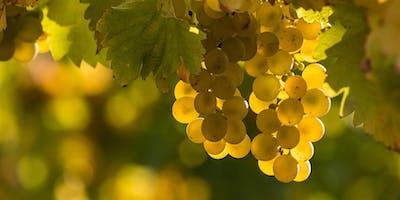 Riesling Appreciation Wine Tasting