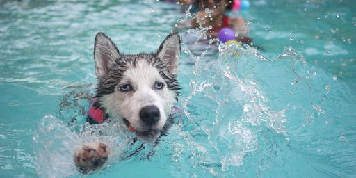 Howl - O - ween Puppy Pool Party