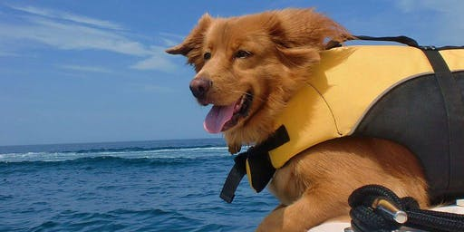 Paddle with your Pooch! Kayaking