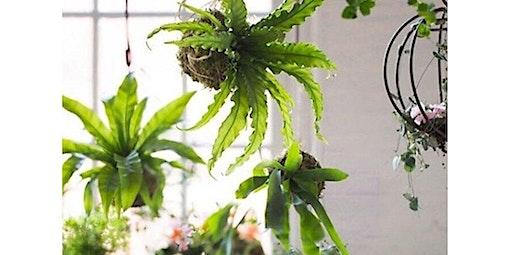 DIY Hanging Moss Ball Gardens (Kokedama)! (04-18-2020 starts at 6:00 PM)