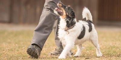 Dog Training 101 Workshop #3