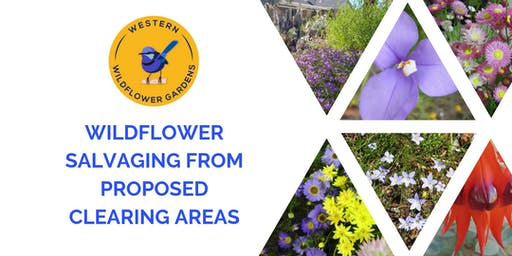 Wildflower Salvaging from Proposed Clearing Areas