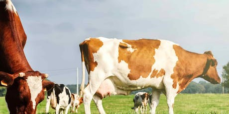 2° Seminario AMTS.Cattle.Pro / 2nd AMTS.Cattle.Pro User seminar biglietti