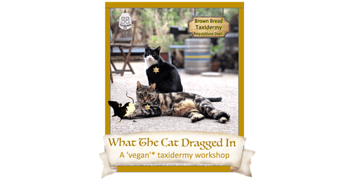 What  The  Cat  Dragged  In  -  a 'vegan'* taxidermy workshop