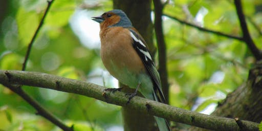 RSPB Big Garden Birdwatch (Northumberland Park)