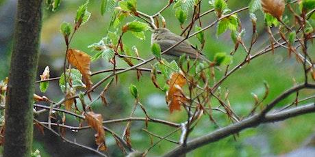 RSPB Big Garden Birdwatch tickets