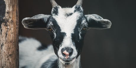 Goat Yoga at Strohmer's Farm - Evening Session tickets