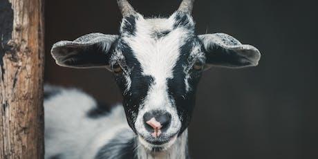 Goat Yoga at Strohmer's Farm tickets