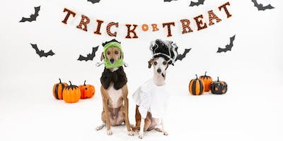 Halloween Pet Photos