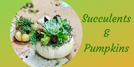 Succulents & Pumpkins